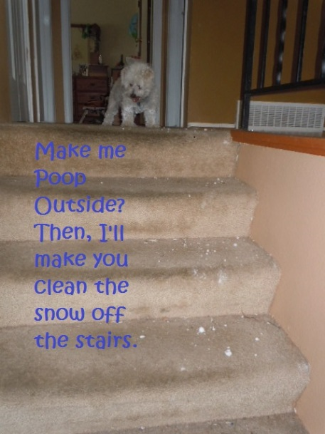 You Make Me Poop Outide I Make you clean the Snow off the Stairs 2.16.2015