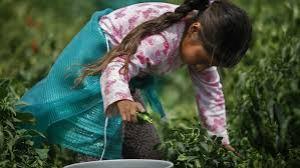 Mexico Produce 5 yr old 9.4.2015