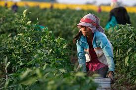 Mexico Produce Child 9.4.2015