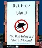 rat free island